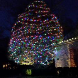 Christmas Tree Lighting by Winter Illuminations
